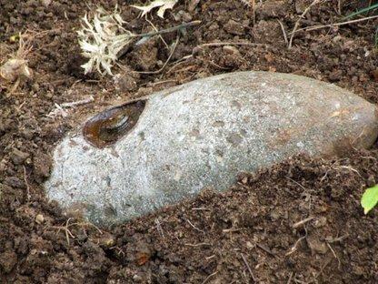 bomb in garden1708914359