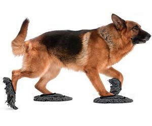 dog-cleaner0183735284