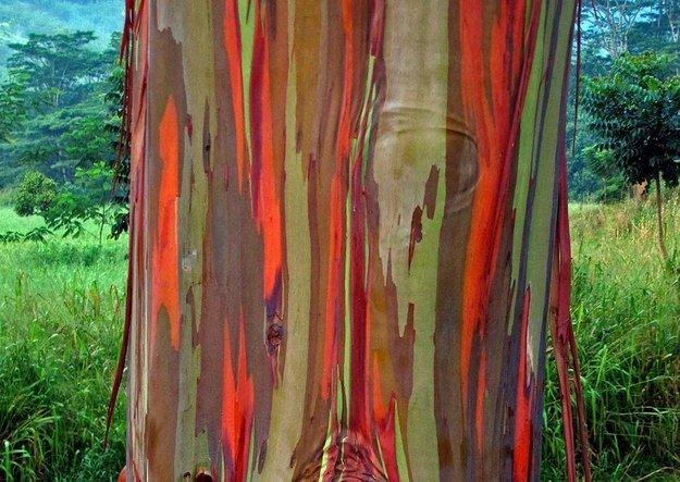 Радужная кора - необычное природное явление на страницах мужского журнала brodude