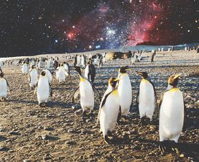 Ученые призывают всех, кто находится на карантине, искать пингвинов и галактики