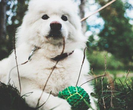 Как устроен сервис по выгулу собак и кому стоит доверить своего питомца