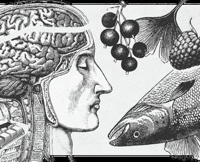 Как меняется твой мозг и почему еще не поздно переучиваться