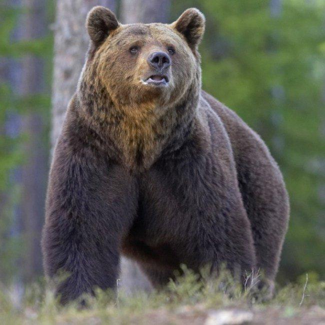 bear-killer1225405267