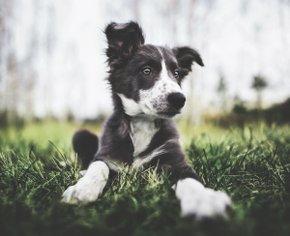 Как сделать из щенка настоящего «хорошего мальчика»